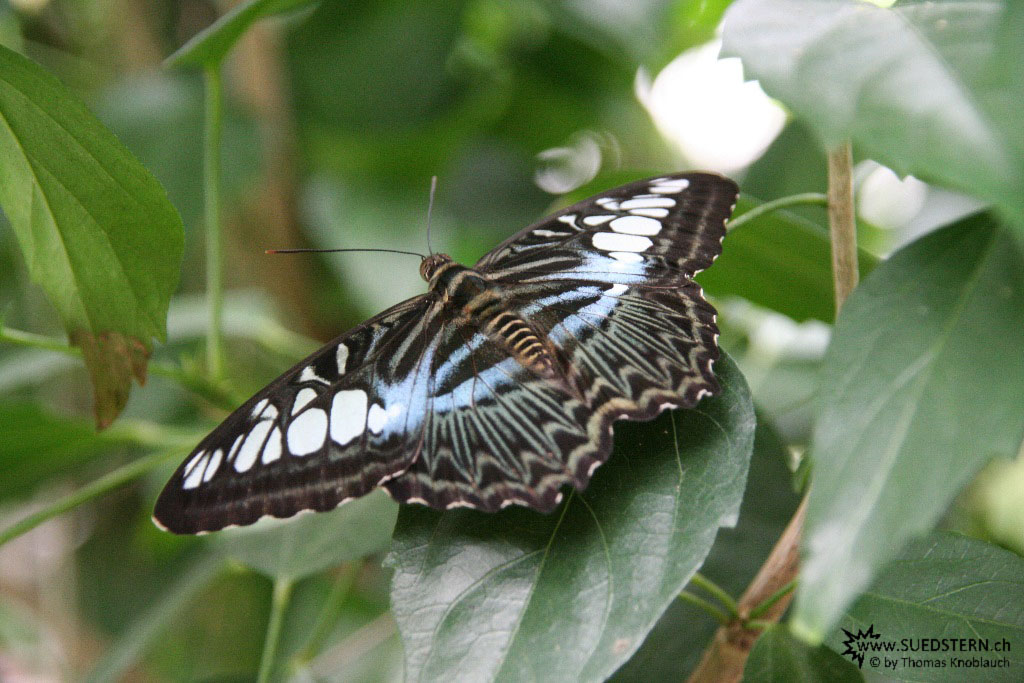 IMG 9574 - Butterfly