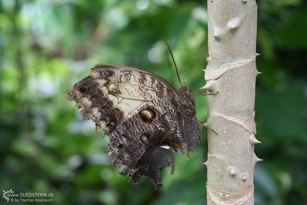 IMG 9576 - Butterfly