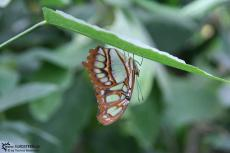 IMG 9589 - Butterfly