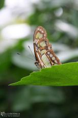 IMG 9637 - Butterfly